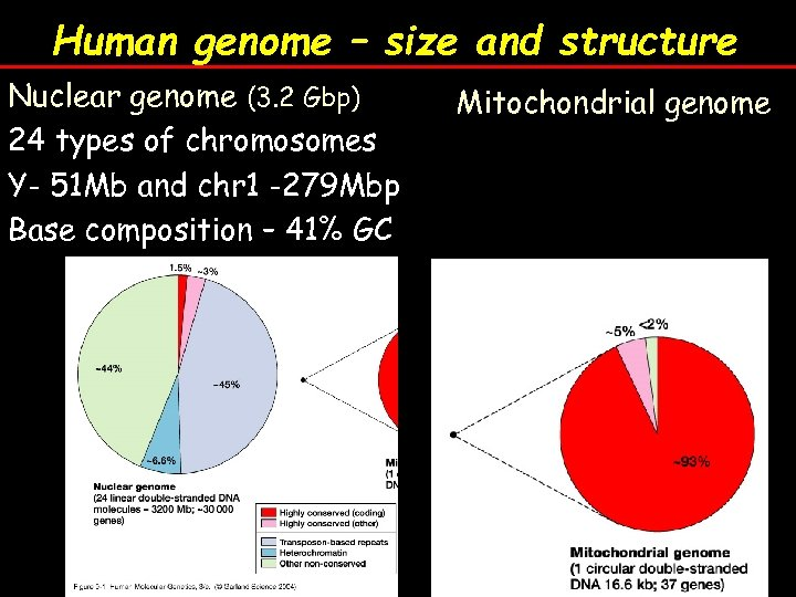 Human genome – size and structure Nuclear genome (3. 2 Gbp) 24 types of