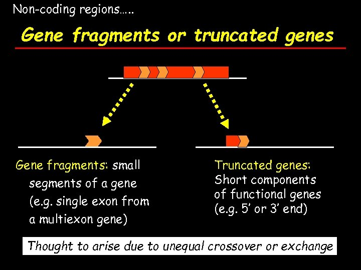 Non-coding regions…. . Gene fragments or truncated genes Gene fragments: small segments of a