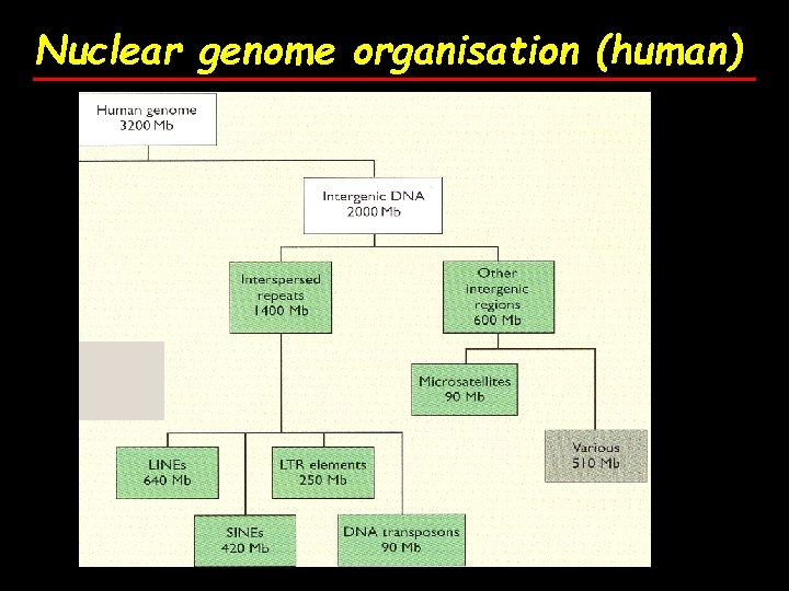 Nuclear genome organisation (human)