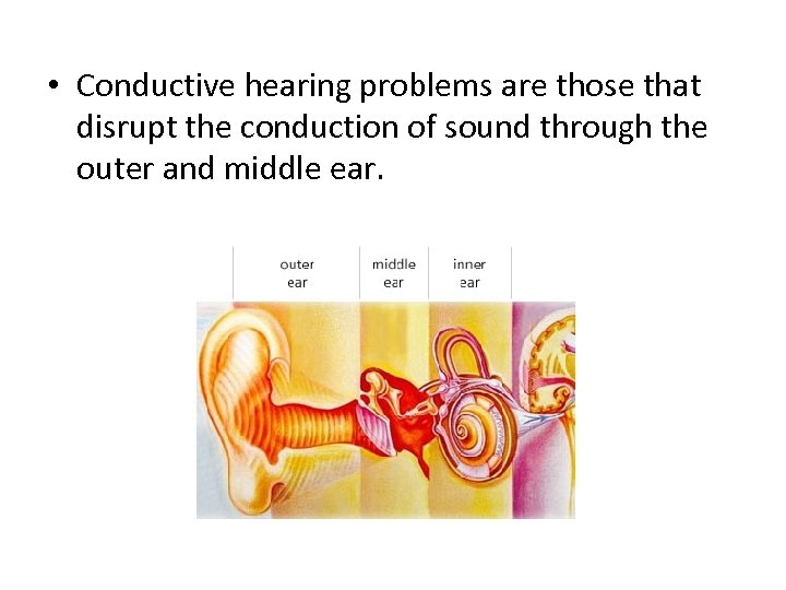 • Conductive hearing problems are those that disrupt the conduction of sound through
