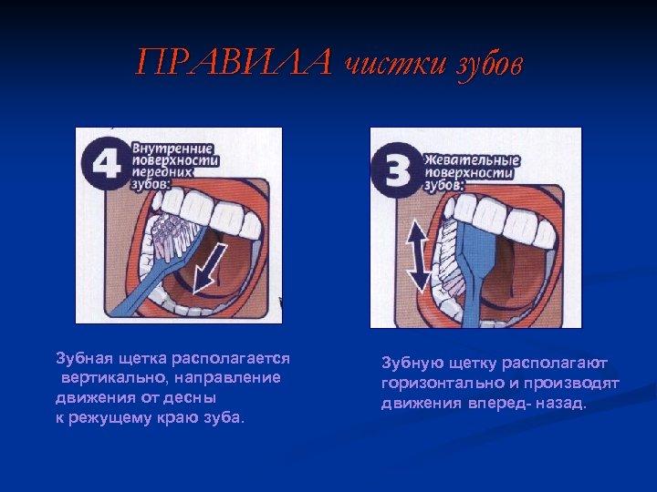 ПРАВИЛА чистки зубов Зубная щетка располагается вертикально, направление движения от десны к режущему краю