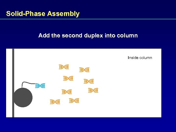 Solid-Phase Assembly Add the second duplex into column Inside column