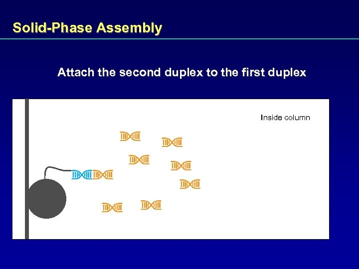 Solid-Phase Assembly Attach the second duplex to the first duplex Inside column