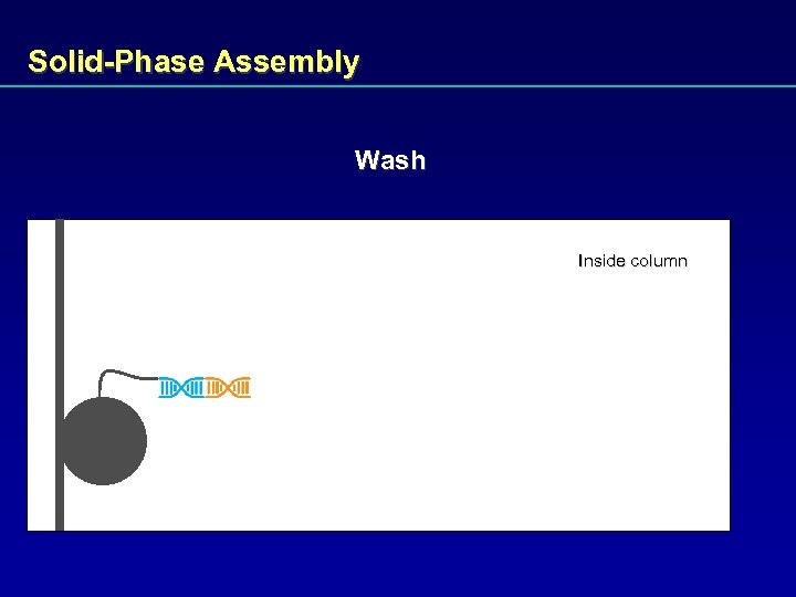Solid-Phase Assembly Wash Inside column