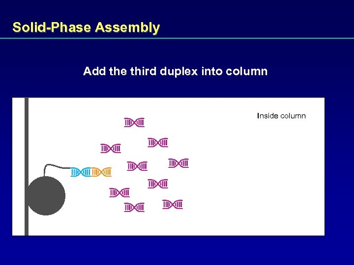 Solid-Phase Assembly Add the third duplex into column Inside column