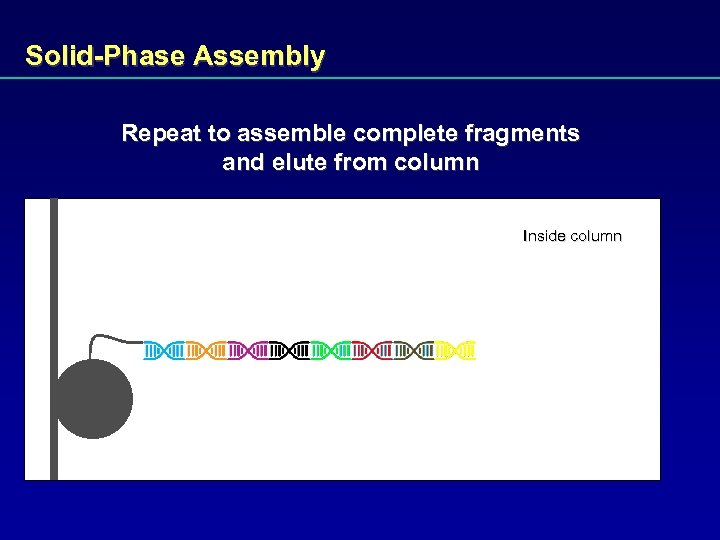 Solid-Phase Assembly Repeat to assemble complete fragments and elute from column Inside column