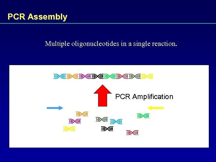 PCR Assembly Multiple oligonucleotides in a single reaction. PCR Amplification