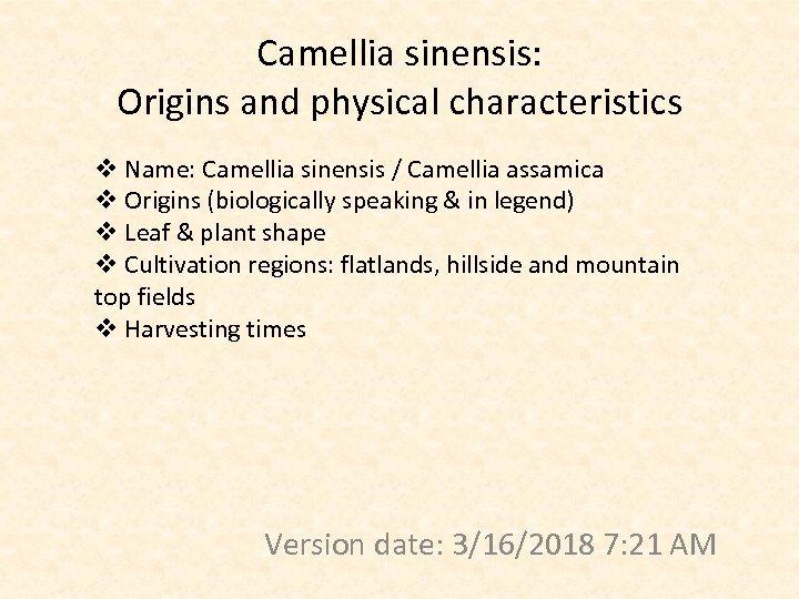 Camellia sinensis: Origins and physical characteristics v Name: Camellia sinensis / Camellia assamica v