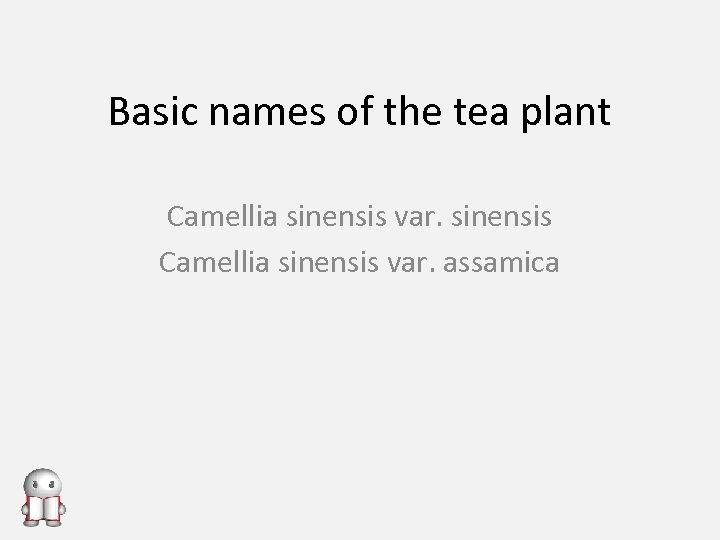Basic names of the tea plant Camellia sinensis var. sinensis Camellia sinensis var. assamica