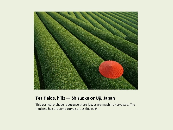 Tea fields, hills — Shizuoka or Uji, Japan This particular shape is because these