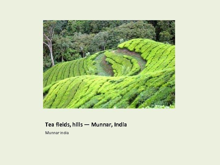 Tea fields, hills — Munnar, India Munnar india