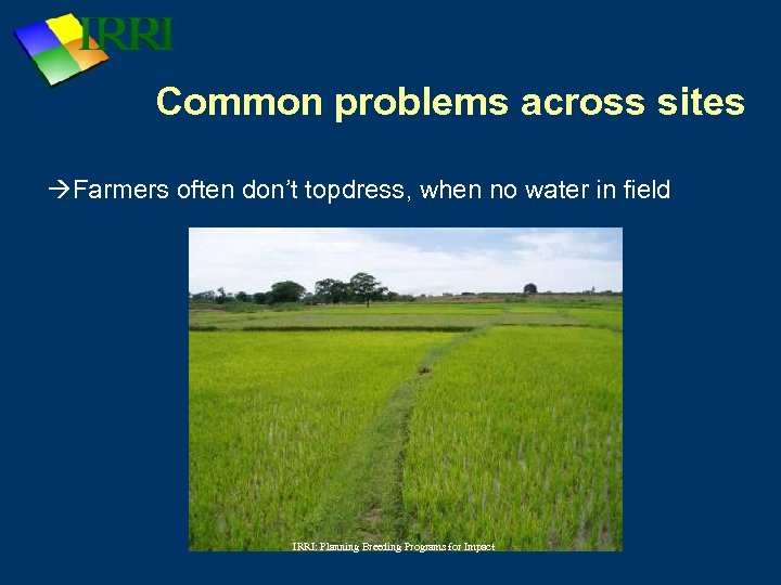 Common problems across sites Farmers often don't topdress, when no water in field IRRI:
