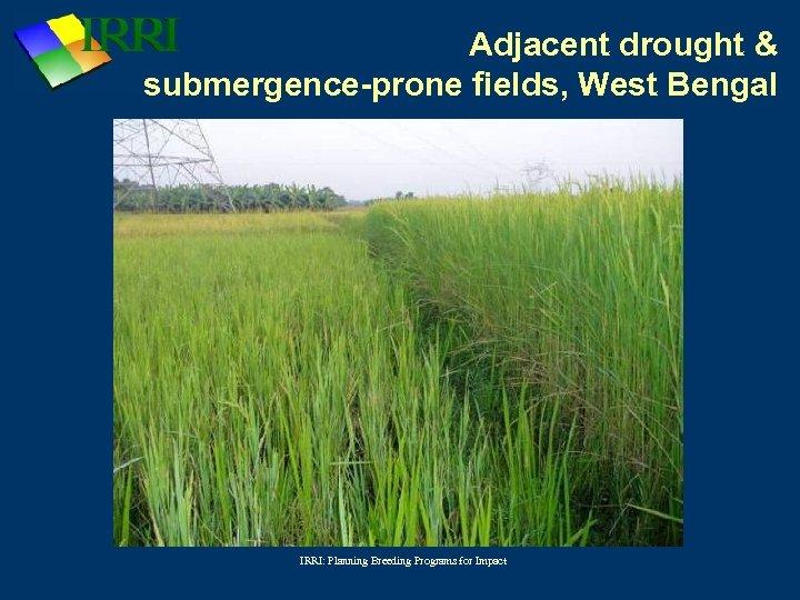 Adjacent drought & submergence-prone fields, West Bengal IRRI: Planning Breeding Programs for Impact