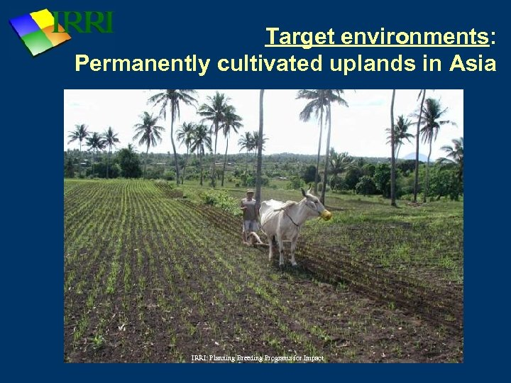 Target environments: Permanently cultivated uplands in Asia IRRI: Planning Breeding Programs for Impact