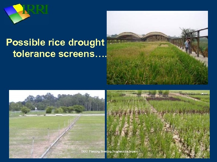 Possible rice drought tolerance screens…. IRRI: Planning Breeding Programs for Impact