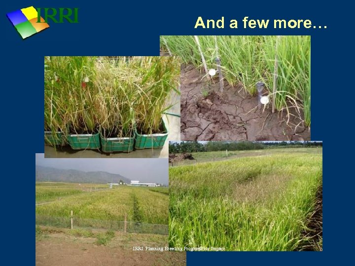 And a few more… IRRI: Planning Breeding Programs for Impact