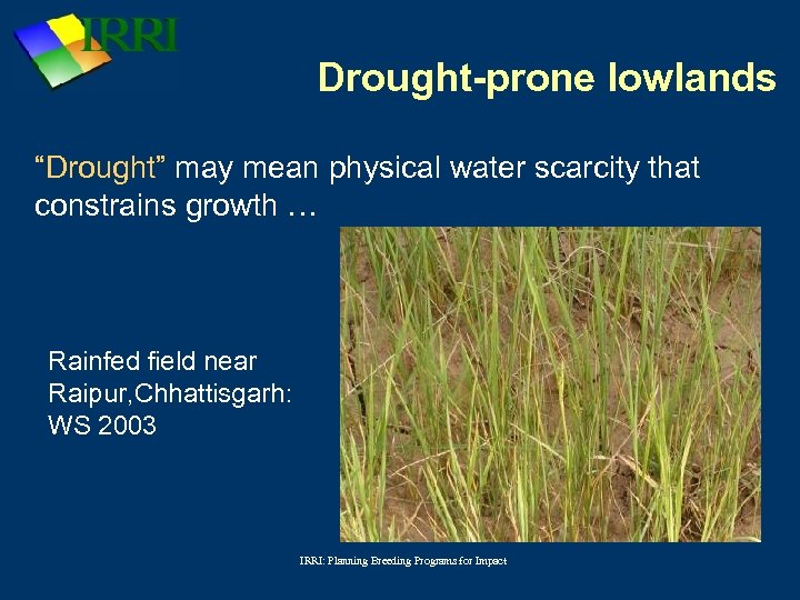 """Drought-prone lowlands """"Drought"""" may mean physical water scarcity that constrains growth … Rainfed field"""