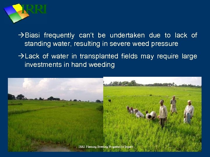 Biasi frequently can't be undertaken due to lack of standing water, resulting in