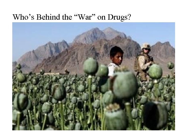 """Who's Behind the """"War"""" on Drugs?"""