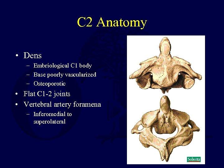 C 2 Anatomy • Dens – Embriological C 1 body – Base poorly vascularized