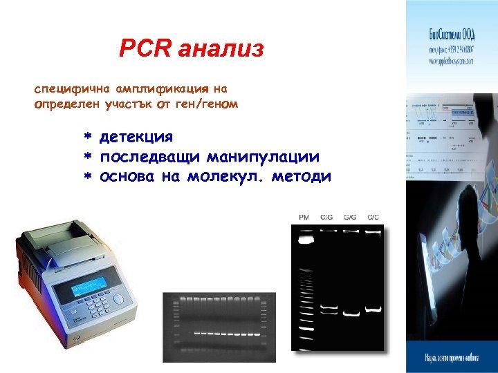PCR анализ специфична амплификация на определен участък от ген/геном детекция последващи манипулации основа на
