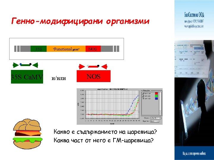 """Генно-модифицирани организми 35 S Ca. MV """"Functional gene"""" и/или NOS Какво е съдържанието на"""