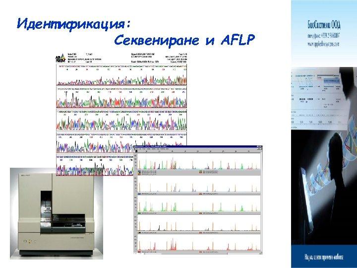 Идентификация: Секвениране и AFLP