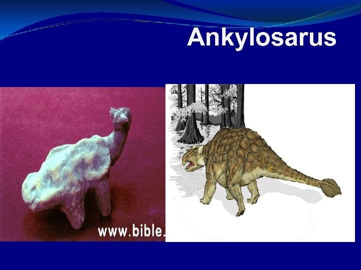 Ankylosarus