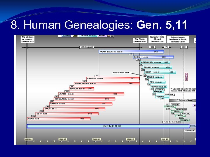 8. Human Genealogies: Gen. 5, 11