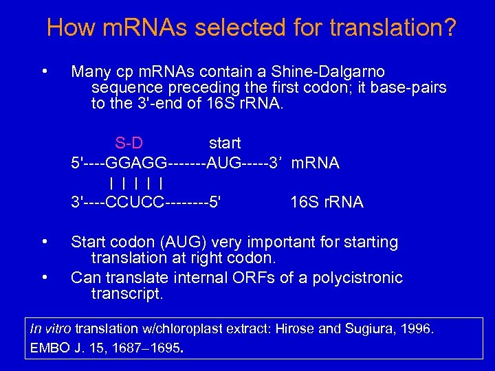 How m. RNAs selected for translation? • Many cp m. RNAs contain a Shine-Dalgarno