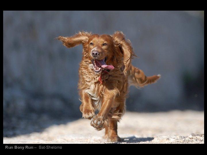 Run Bony Run – Bat-Shelomo