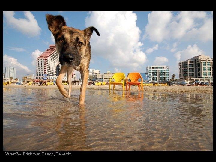 What? – Frishman Beach, Tel-Aviv