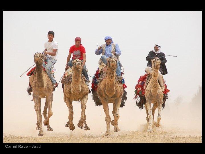 Camel Race – Arad