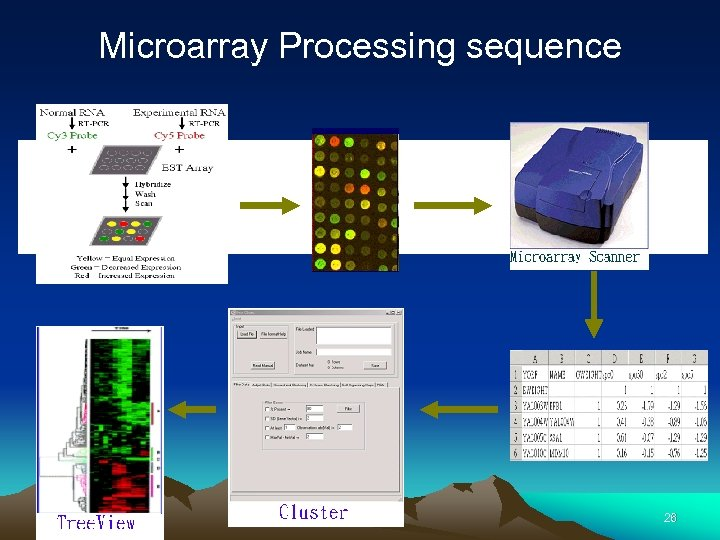 Microarray Processing sequence 26