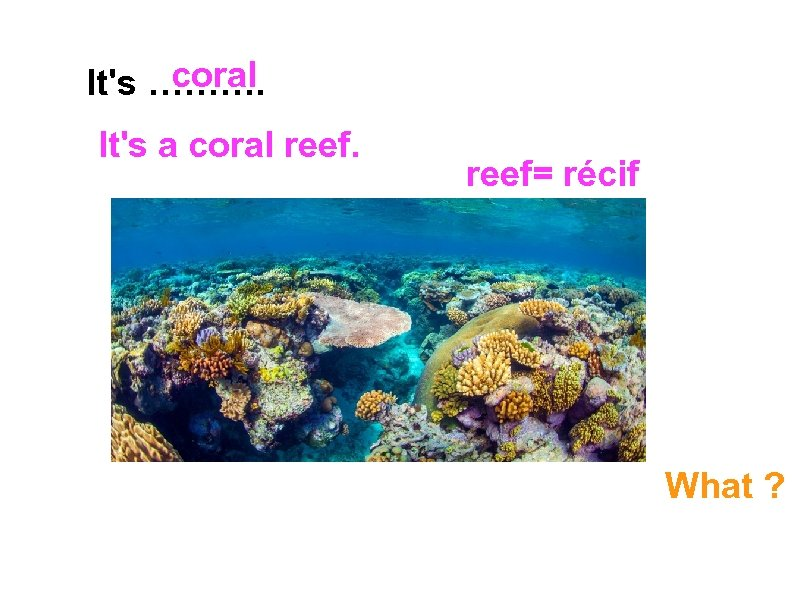 coral It's ………. It's a coral reef= récif What ?