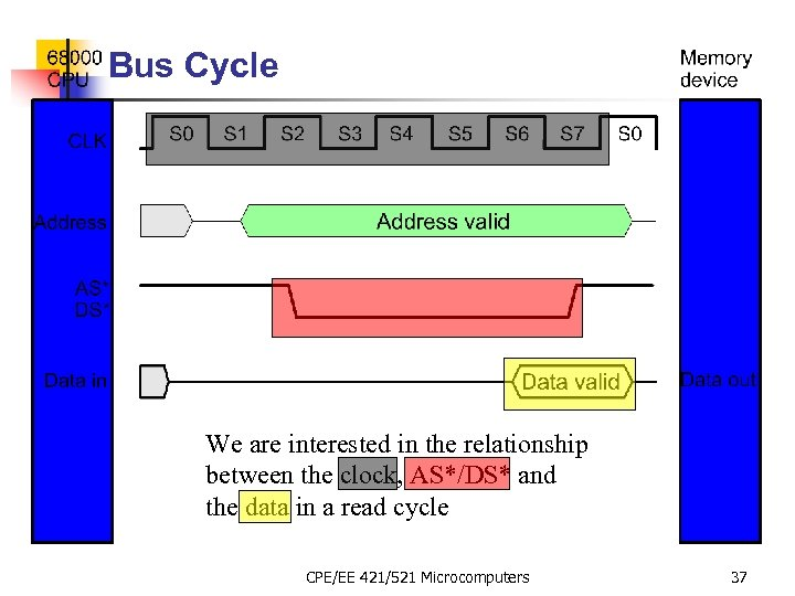 Bus Cycle We are interested in the relationship between the clock, AS*/DS* and the