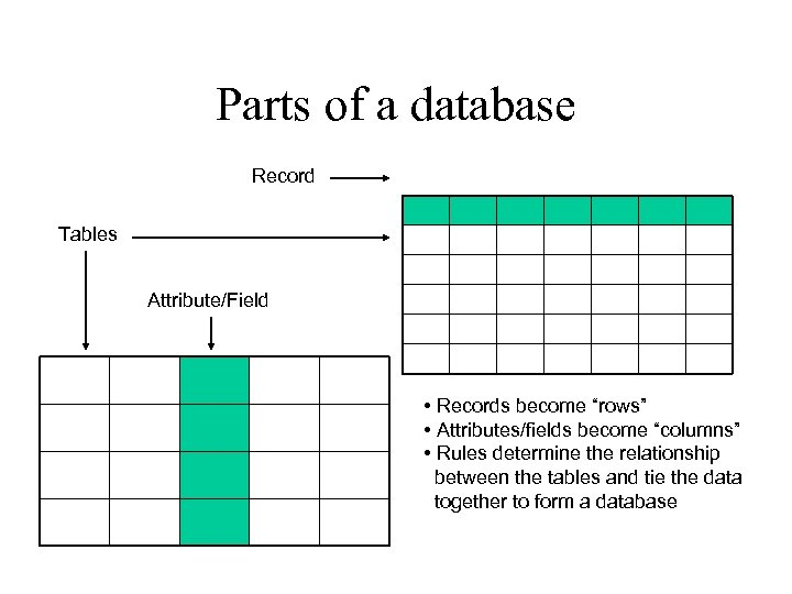 "Parts of a database Record Tables Attribute/Field • Records become ""rows"" • Attributes/fields become"