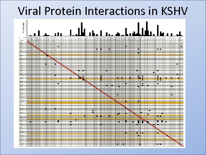Viral Protein Interactions in KSHV