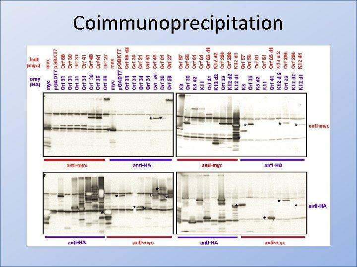Coimmunoprecipitation