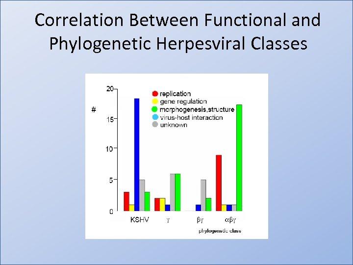 Correlation Between Functional and Phylogenetic Herpesviral Classes