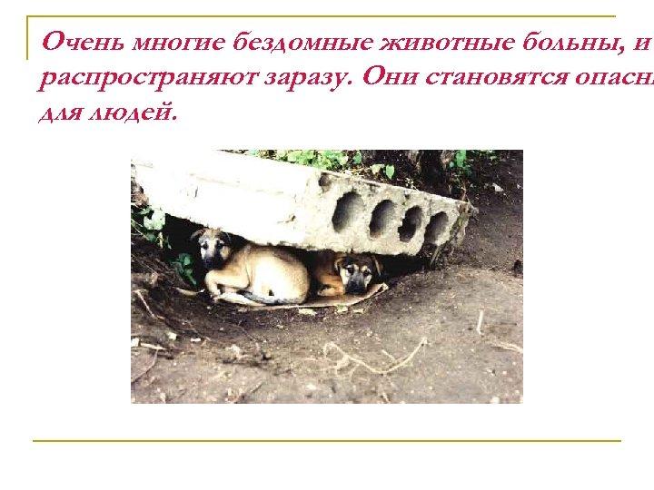 Очень многие бездомные животные больны, и распространяют заразу. Они становятся опасны для людей.