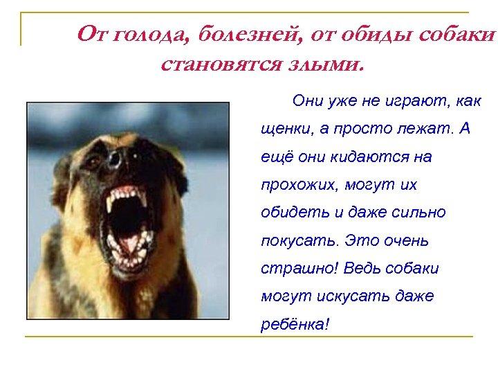 От голода, болезней, от обиды собаки становятся злыми. Они уже не играют, как щенки,