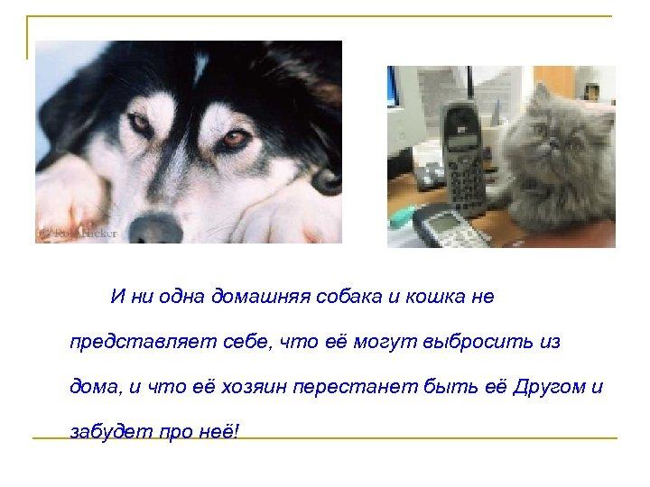 И ни одна домашняя собака и кошка не представляет себе, что её могут выбросить