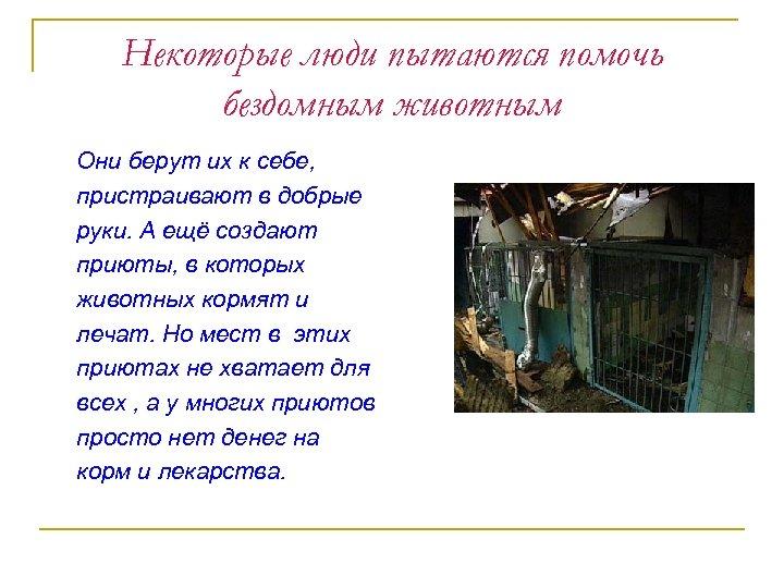 Некоторые люди пытаются помочь бездомным животным Они берут их к себе, пристраивают в добрые