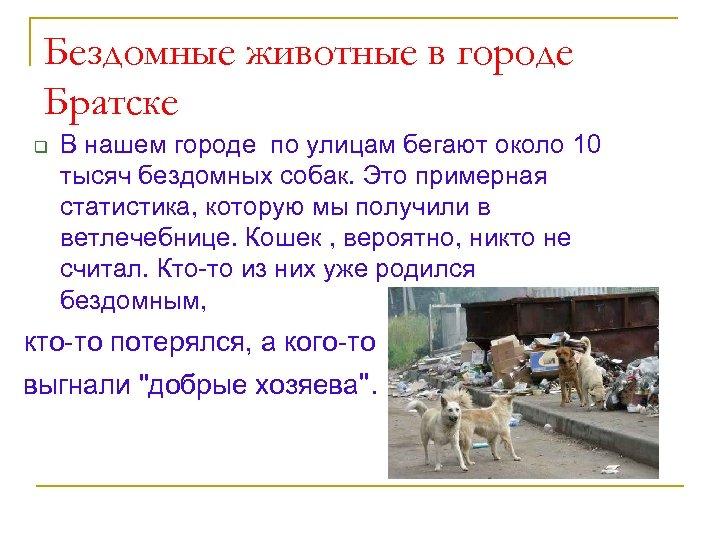 Бездомные животные в городе Братске q В нашем городе по улицам бегают около 10