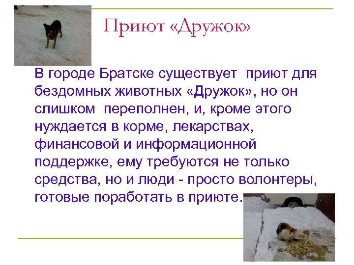 Приют «Дружок» В городе Братске существует приют для бездомных животных «Дружок» , но он