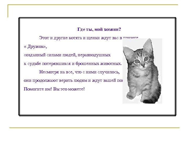 Где ты, мой хозяин? Этот и другие котята и щенки ждут вас в приюте