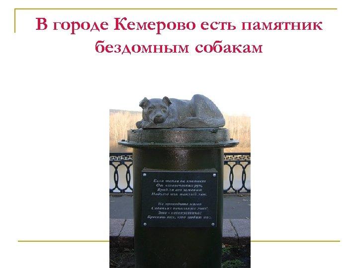 В городе Кемерово есть памятник бездомным собакам