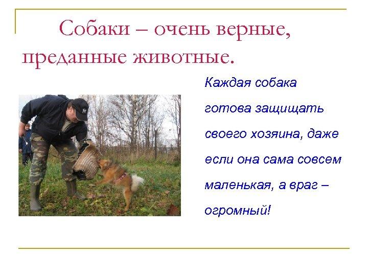 Собаки – очень верные, преданные животные. Каждая собака готова защищать своего хозяина, даже если