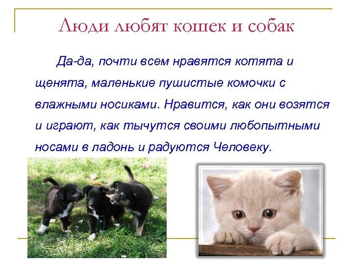 Люди любят кошек и собак Да-да, почти всем нравятся котята и щенята, маленькие пушистые